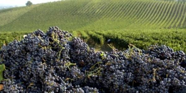 """Giovedì 21 giugno """"Strawberry Food & Wine"""" dedicato ai vini emiliani dell'azienda Cinque Campi di Montecalvo in provincia di Reggio Emilia"""